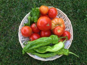 Foto-de-experiencias-gastronómicas-verduras-frescas