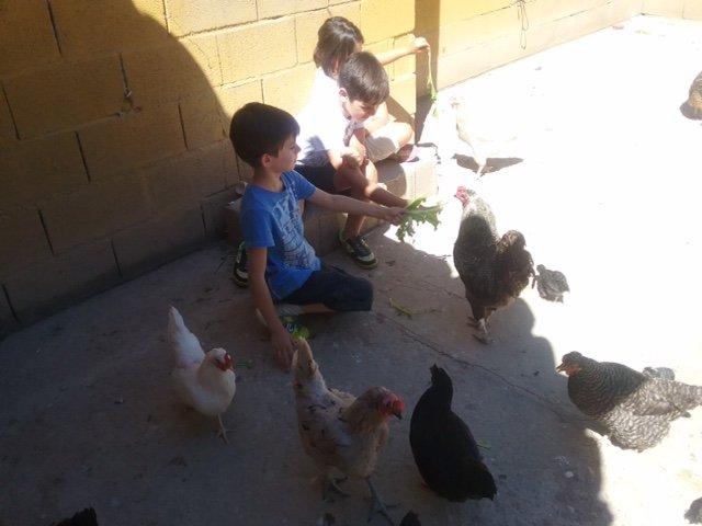 granja-escuela-ingles-9